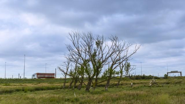 M56 Trees